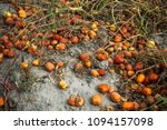 lots of tomatoes are expired... | Shutterstock . vector #1094157098