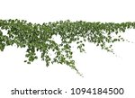 climbing plants or plant... | Shutterstock . vector #1094184500