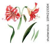 pink striped amaryllis. floral...   Shutterstock . vector #1094215304