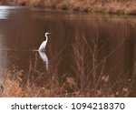ardea alba linnaeus | Shutterstock . vector #1094218370
