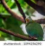 deep orange  green  and white... | Shutterstock . vector #1094256290