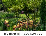 iris flowers blooming in a... | Shutterstock . vector #1094296736