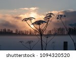 dry hogweed in winter on a... | Shutterstock . vector #1094320520