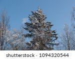 coniferous tree covered with... | Shutterstock . vector #1094320544