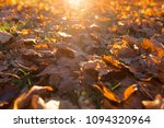 fallen trees in autumn in the... | Shutterstock . vector #1094320964