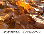 fallen trees in autumn in the... | Shutterstock . vector #1094320970
