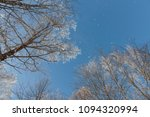 snow on branches against the... | Shutterstock . vector #1094320994