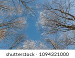 snow on branches against the... | Shutterstock . vector #1094321000