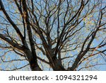 dry tree branches against the... | Shutterstock . vector #1094321294