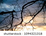 dry tree branches against the... | Shutterstock . vector #1094321318