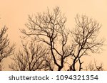 dry branches of trees against a ... | Shutterstock . vector #1094321354