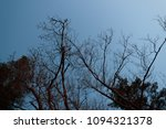 dry branches of trees against... | Shutterstock . vector #1094321378