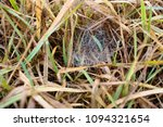 dry grass and web in spring | Shutterstock . vector #1094321654