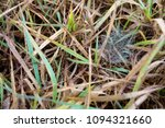dry grass and web in spring | Shutterstock . vector #1094321660