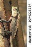 lizard natural action   Shutterstock . vector #1094328359