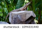 full body shot from head to... | Shutterstock . vector #1094331440