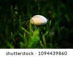 champignon mushroom grass... | Shutterstock . vector #1094439860