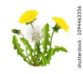 dandelion bush realistic... | Shutterstock .eps vector #1094463356