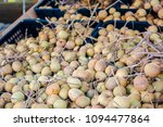 fresh longans  euphoria longan  ... | Shutterstock . vector #1094477864