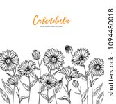 hand drawn wild hay flowers.... | Shutterstock .eps vector #1094480018