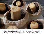 peeled champignons in a plate... | Shutterstock . vector #1094498408