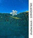 underwater flora leaf background   Shutterstock . vector #1094509760
