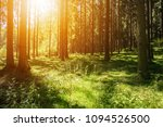 beautiful forest scenery woods... | Shutterstock . vector #1094526500