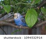 the blue white black gray... | Shutterstock . vector #1094532914