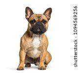 French Bulldog Sitting Against...