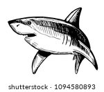 Shark Sketch. Vector...