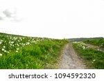 beautiful dandelion field with... | Shutterstock . vector #1094592320
