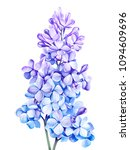 blue lilac isolated on white... | Shutterstock . vector #1094609696