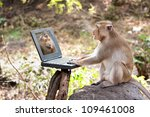 Stock photo  monkeys play computer 109461008