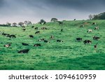 irish countryside with cows in... | Shutterstock . vector #1094610959