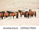 Wild Horses Living In The...