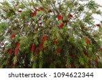 flowers of turkey. flora of...   Shutterstock . vector #1094622344