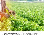 Farmer Holds In His Hands A...