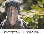 shoebill staring in jungle  | Shutterstock . vector #1094654468