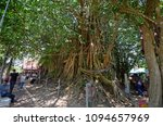 Old Temple Under Tree At...