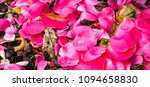 flower petals on the ground | Shutterstock . vector #1094658830