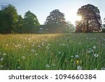 a field of dandelion seed heads ... | Shutterstock . vector #1094660384