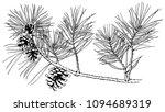 Hand Drawn Pine Tree Branch...