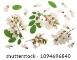 blossoming acacia with leafs... | Shutterstock . vector #1094696840