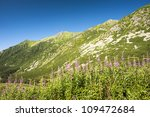 summer mountains scenery in... | Shutterstock . vector #109472684