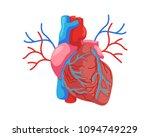 healthy internal human heart...   Shutterstock .eps vector #1094749229