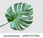 real monstera leaves on white... | Shutterstock . vector #1094757596