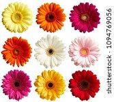 Set Of Gerbera Daisy Flowers...