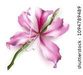 pink bauhinia purpurea isolated ... | Shutterstock .eps vector #1094789489