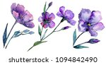 Stock photo violet flax floral botanical flower wild spring leaf wildflower isolated aquarelle wildflower 1094842490