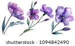violet flax. floral botanical... | Shutterstock . vector #1094842490